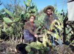 La agricultora Marta Ponce y su empleado Alex Gustavo, muestran  Diario El Trabajo las tunas deshidratadas que tiene que tirar a la basura tras las fuertes sequías en Los Galdames de Santa María.