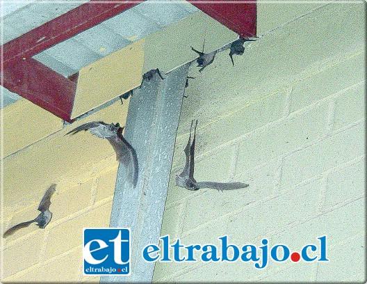 murcielagos plaga: