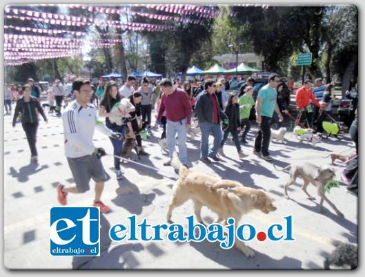 Alrededor de 100 vecinos de nuestra comuna y acompañados de sus mascotas, participaron en la primera 'perrotón' que se realizó en San Felipe.