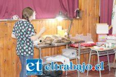 El proyecto de esterilización gratuita de mascotas, es ejecutado por la empresa veterinaria 'Maurelia y Salinas Ltda.', y considera en total la intervención de 1.105 mascotas de la comuna de Panquehue.