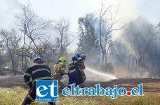Bomberos debió entrar de infantería para combatir el fuego (Fotos Los Andes Online).