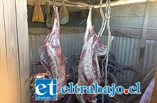 Carabineros halló en el domicilio del imputado los animales faenados en el interior de una bodega del domicilio ubicado en el sector Las Cadenas de Santa María la tarde de este lunes.