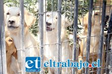 PARA ADOPTAR.- Estos son algunos de los perritos que don Jorge necesita dar en adopción, apenas tienen un año de edad.