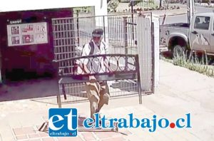 El momento exacto cuando el antisocial se apodera de la banca perteneciente a la Clínica Veterinaria PuntoVet, ubicada en la intersección de las avenidas Miraflores con Yungay en San Felipe.