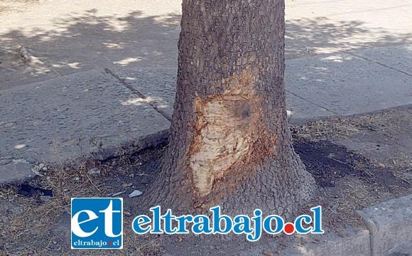 Este es el árbol con el que chocó el vehículo, los daños fueron cuantiosos.