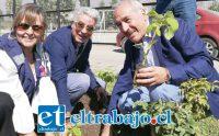 Patricia Boffa, en representación del Serviu, junto al concejal Juan Sabaj y el alcalde Patricio Freire, plantando los árboles Paulownia, considerados los 'salvadores del mundo' debido a sus múltiples características amigables con el medio ambiente.