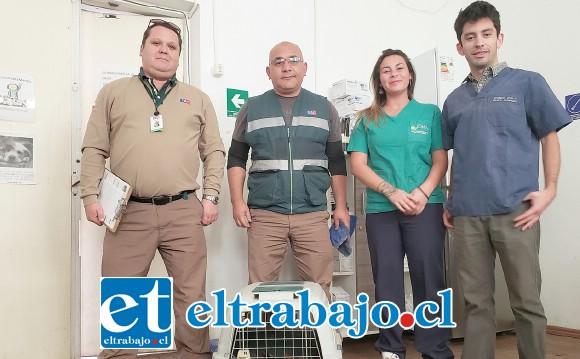 Este es el equipo del centro veterinario municipal que realizó las curaciones para salvar la extremidad del animal.