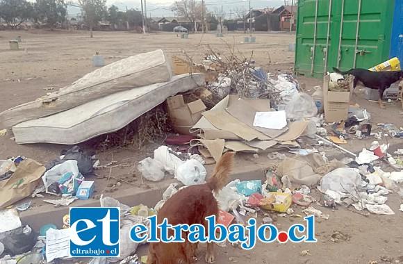 Acá podemos apreciar la gran cantidad de basura alrededor del contenedor del Punto Limpio, donde incluso se pueden ver hasta colchones.