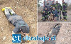 La destacable acción de Bomberos de la Tercera Compañía de Santa María permitió devolverle la alegría y fortaleza al cachorro rescatado.