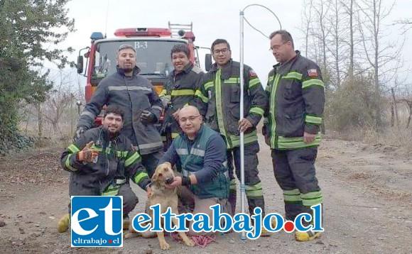 La destacable acción de Bomberos permitió devolverle la alegría y fortaleza al cachorro rescatado, posando en la fotografía junto a los voluntarios de la Tercera Compañía de Santa María.
