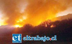 Las llamas consumieron alrededor de 10 hectáreas de pastizales en Panquehue.