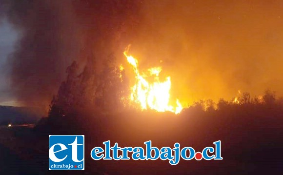 En total fueron unas 16 hectáreas las que fueron consumidas por el fuego.