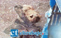 Uno de los animalitos muerto en el 'criadero del terror'.