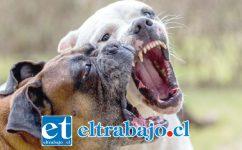 ASESINARON A SU AMIGO.- De amigables mascotas los perros de Tito Foncea se convirtieron en mortales fieras que acabaron con su vida. (Referencial)