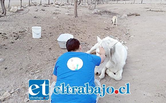 Voluntarios alimentando a los animales del sector El Manzano en la comuna de Putaendo, en esta primera entrega de donaciones de la comunidad UAC para ir en ayuda a los sectores afectados por la sequía en el Valle de Aconcagua.