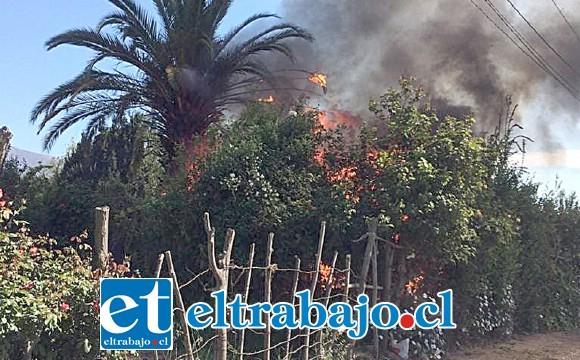 El incendio se declaró alrededor de las 11:00 horas de ayer lunes en el sector Quebrada Herrera de San Felipe, afectando a tres inmuebles.