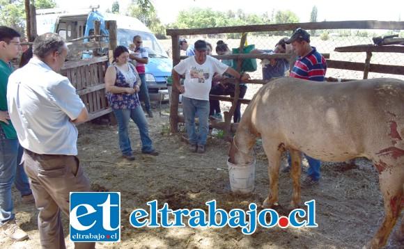 VECINOS MUY PREOCUPADOS.- Toda la comunidad del sector Las Núñez en Rinconada de Los Andes, se mostraron asombrados por este cruel ataque a los animales, y también solidarios con sus dueños.