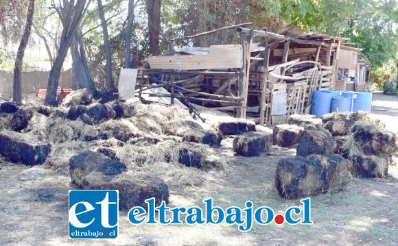 TRISTE PANORAMA.- Así quedó el humilde establo o granja de don Adacto Santander, luego que desalmados lo incendiaran la madrugada de este jueves.