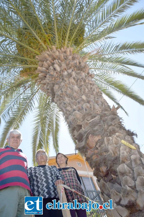 PALMERA LES AFECTA.- Estos vecinos están solicitando a la Dipma de San Felipe que dé la autorización para que la empresa a cargo de las obras en Hermanos Carrera quite esta palmera de la entrada de su casa.