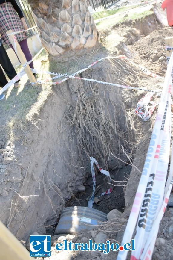 PROFUNDAS RAÍCES.- Así de profundas son las raíces de esta palmera, las que están ya metidas muy adentro del terreno de estos vecinos.