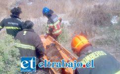 Bomberos de Santa María rescataron al perrito que se ahogaba el pasado 5 de diciembre. (Fotografías: Emergencias Santa María).