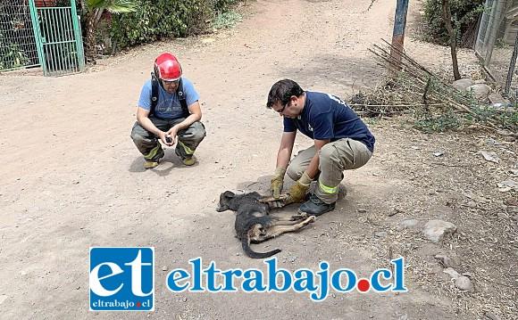 El perrito en situación de abandono fue una de las víctimas de haber sufrido una descarga eléctrica.