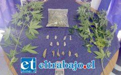 Detectives del Grupo Microtráfico Cero de la PDI, procedieron a la incautación de esta cantidad de marihuana y cultivo ilegal de cannabis sativa desde el domicilio del imputado en Villa Parque Alameda de San Felipe.