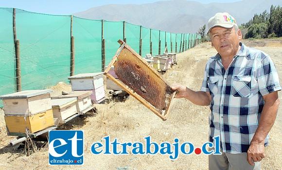 APICULTOR DESESPERADO.- Sólo estas 24 colmenas sobreviven al polvo que esta empresa genera en el sector Parrasía bajo.