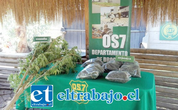 Personal del OS7 de Carabineros incautó siete plantas de cannabis, más de dos kilos de marihuana y una escopeta desde el domicilio de la actual sentenciada en el sector de Tierras Blancas de San Felipe. (Fotografía Referencial).