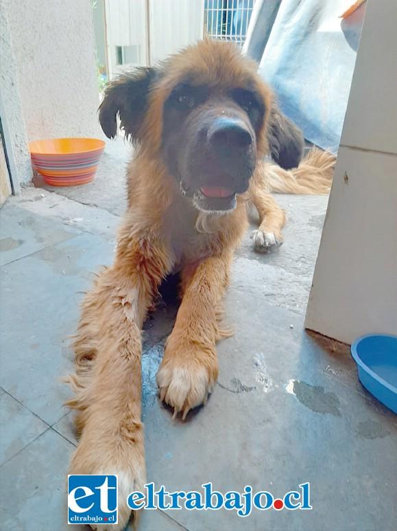 Se inició una campaña para buscar un hogar donde pueda vivir este perrito rescatado de las aguas.