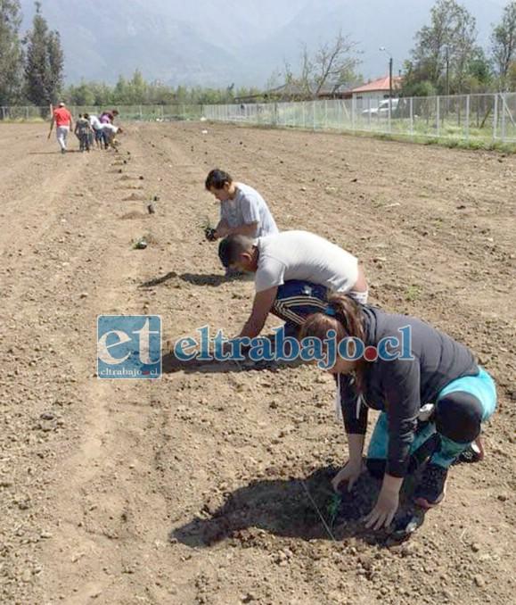 ES SU TERRENO.- Aquí vemos a los propios socios del club, plantando césped y cuidando lo que tanto les ha costado obtener.