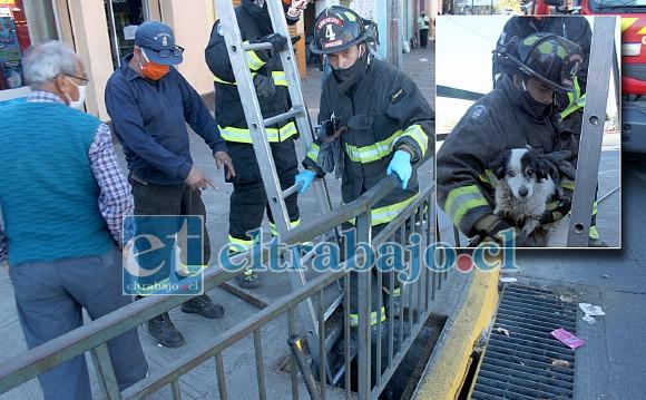 Por más de media hora estos voluntarios de la Cuarta Compañía de Bomberos estuvieron en maniobras de rescate de un perrito callejero en 'Esquina Colorada'.