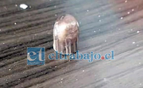 La bala que se encontró en Villa Las Acacias Tercera Etapa.