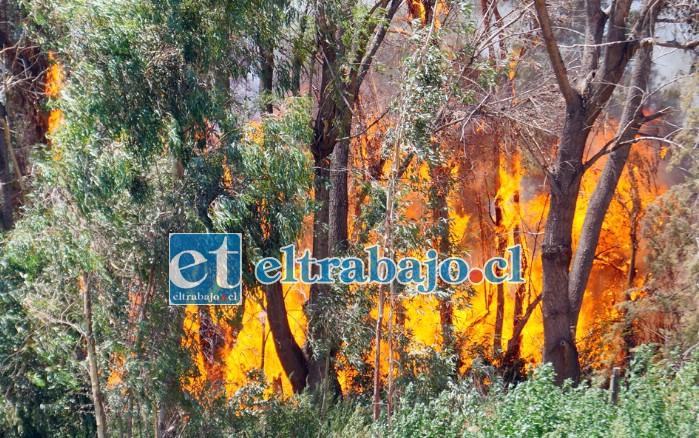 BOSQUE DESTRUIDO.- El bosque que está frente a la vivienda siniestrada, a unos 200 metros de distancia, también fue arrasado por las llamas.