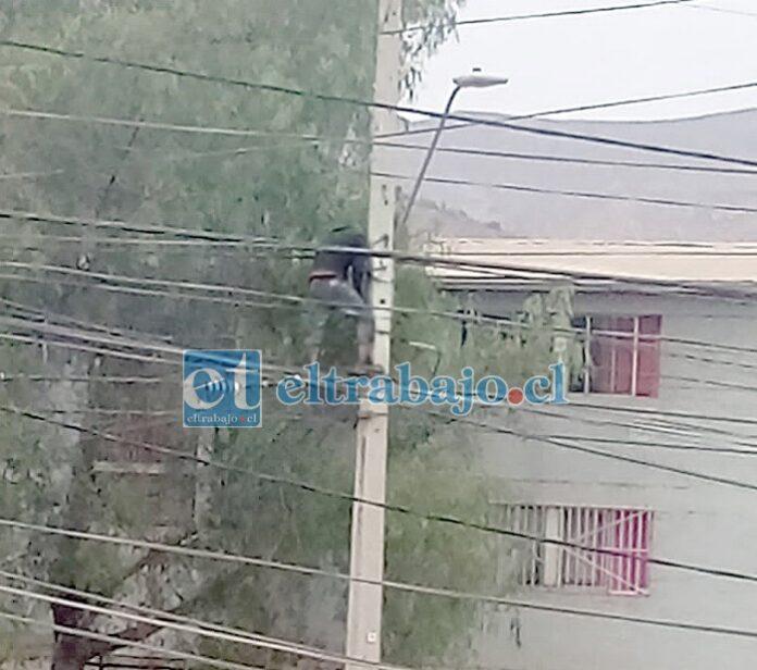 Acá se aprecia al sujeto arriba del poste efectuando las conexiones.